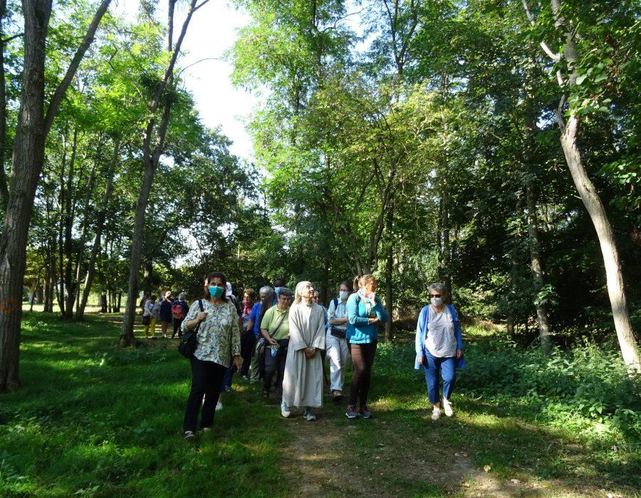 Découverte du bois du monastère de Martigné-Briand